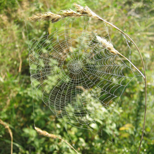 spider web on the North Downs